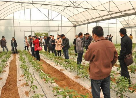蔬菜产业成为四川嘉明镇村民脱贫致富新产业